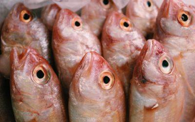 Pourquoi manger du poisson deux fois par semaine ?